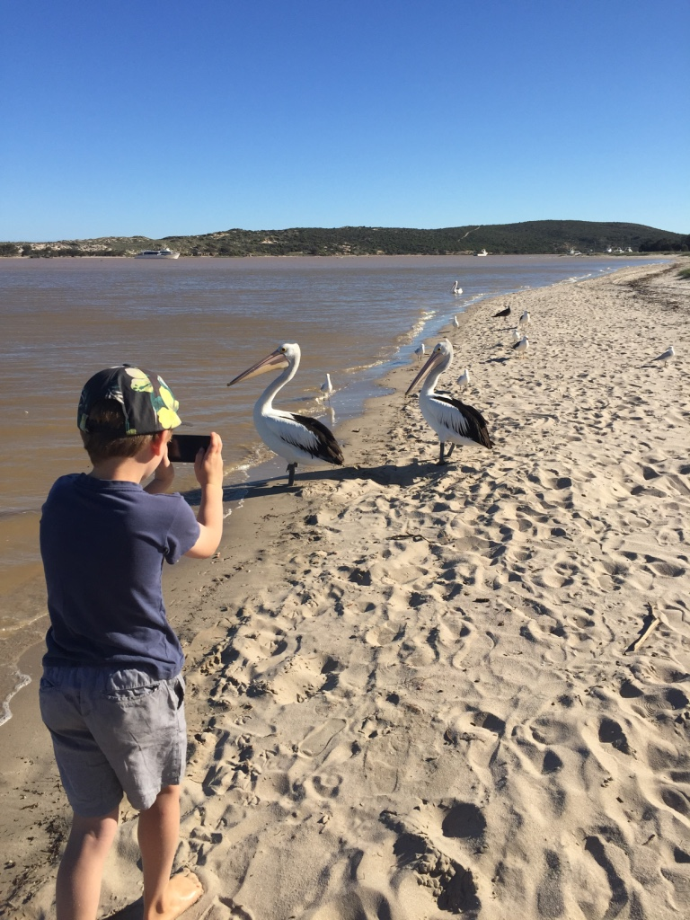 Aaron photographing pelicans - he has a new passion for photography.