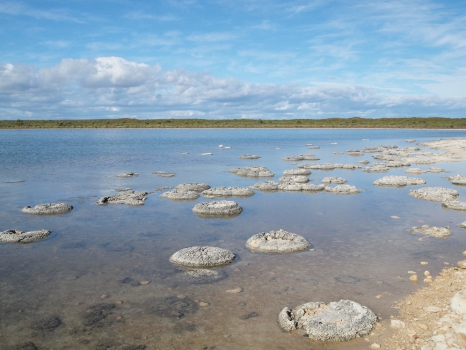 Stromatolites are thought to be one of the oldest forms of life on earth!