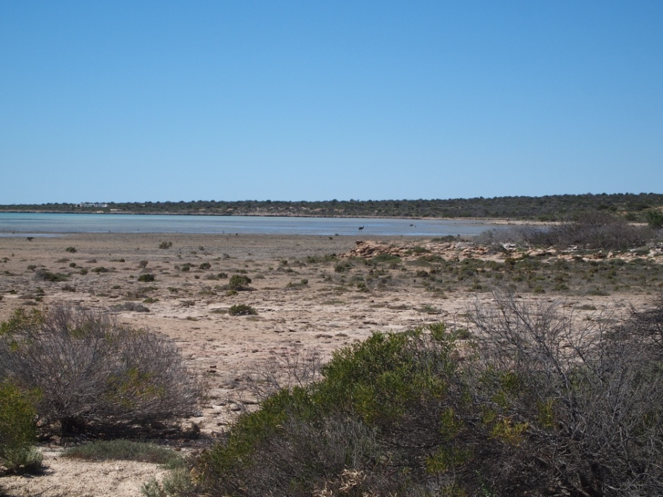 There are emus swimming in this photo...very small :)