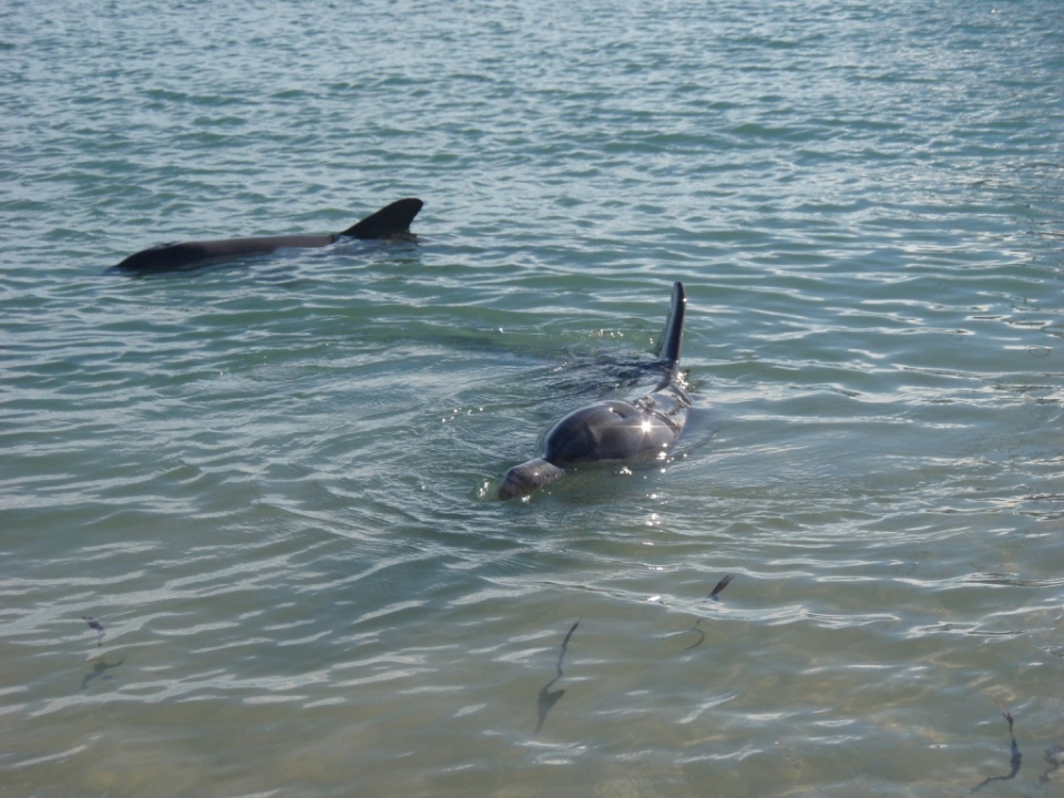 Dolphins come to say hello