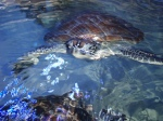 Turtle smiles