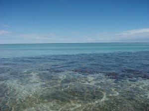 the Stromatolites