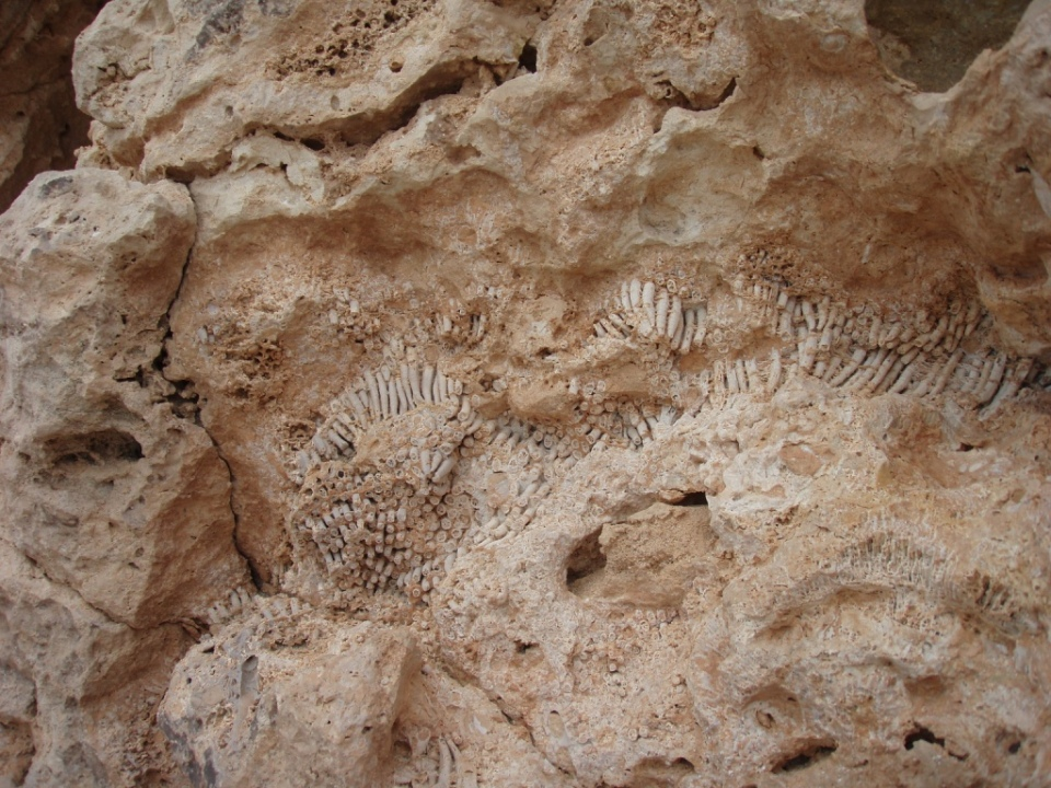 Shells and fossils in the rocks