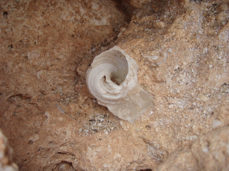 Shells burried in the rock