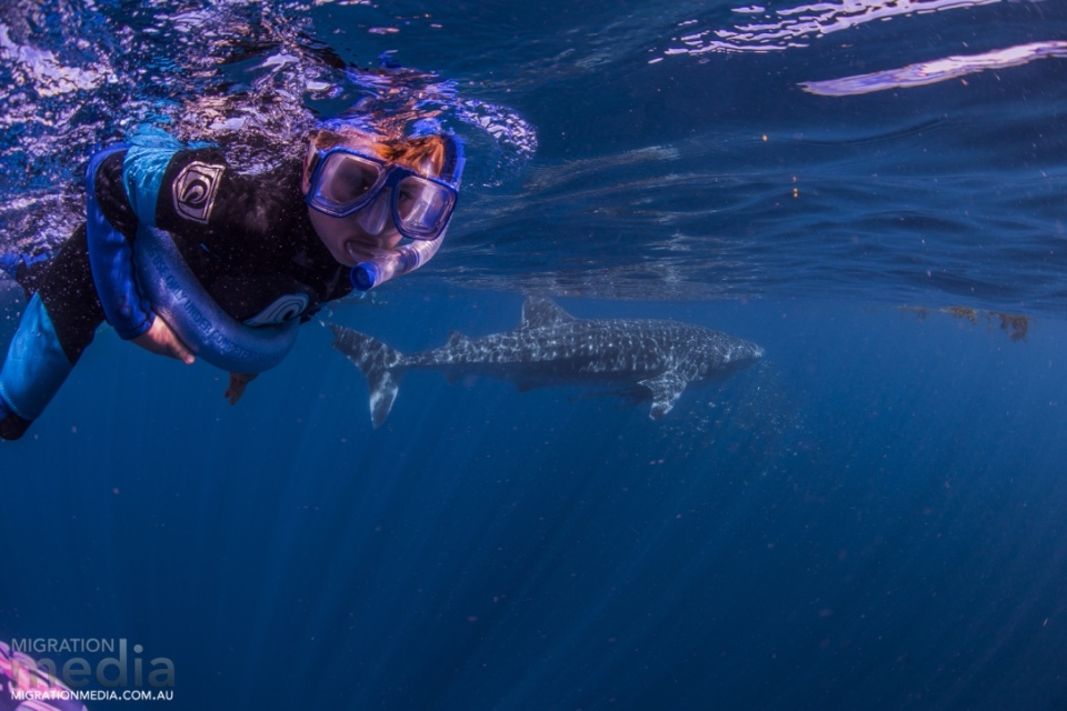 Aaron with the whale shark