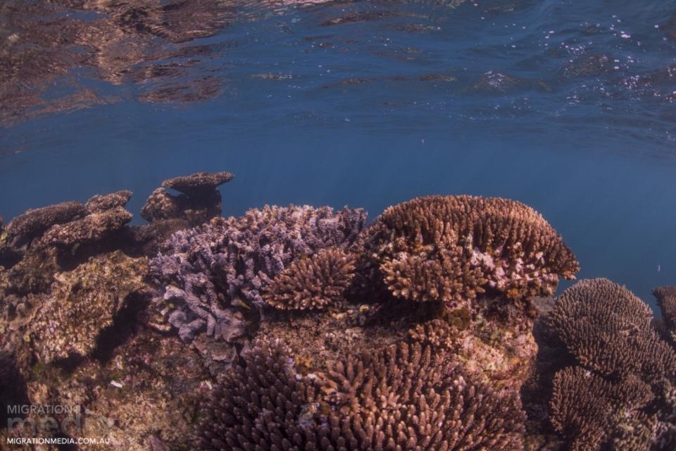Coral on ningaloo
