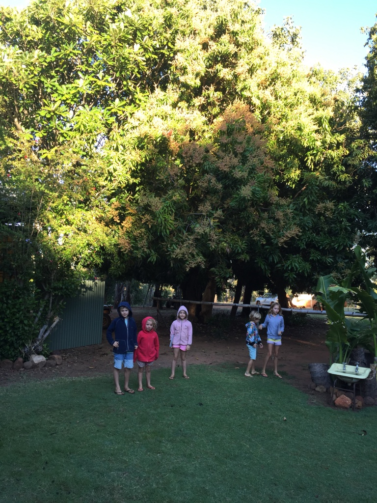 Kids under the flowering mango tree