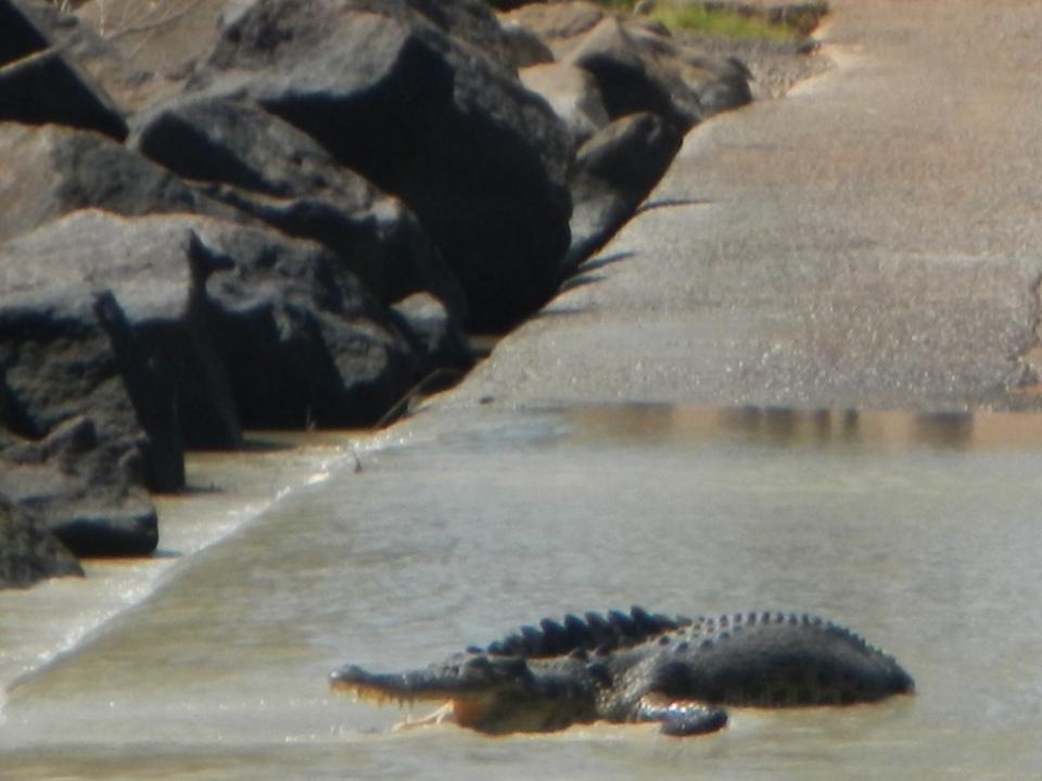 Cheeky crocs at Cahills