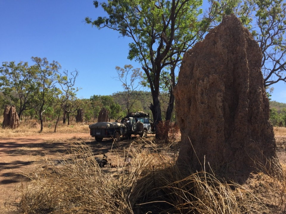 A huge termite mound at our lunch stop